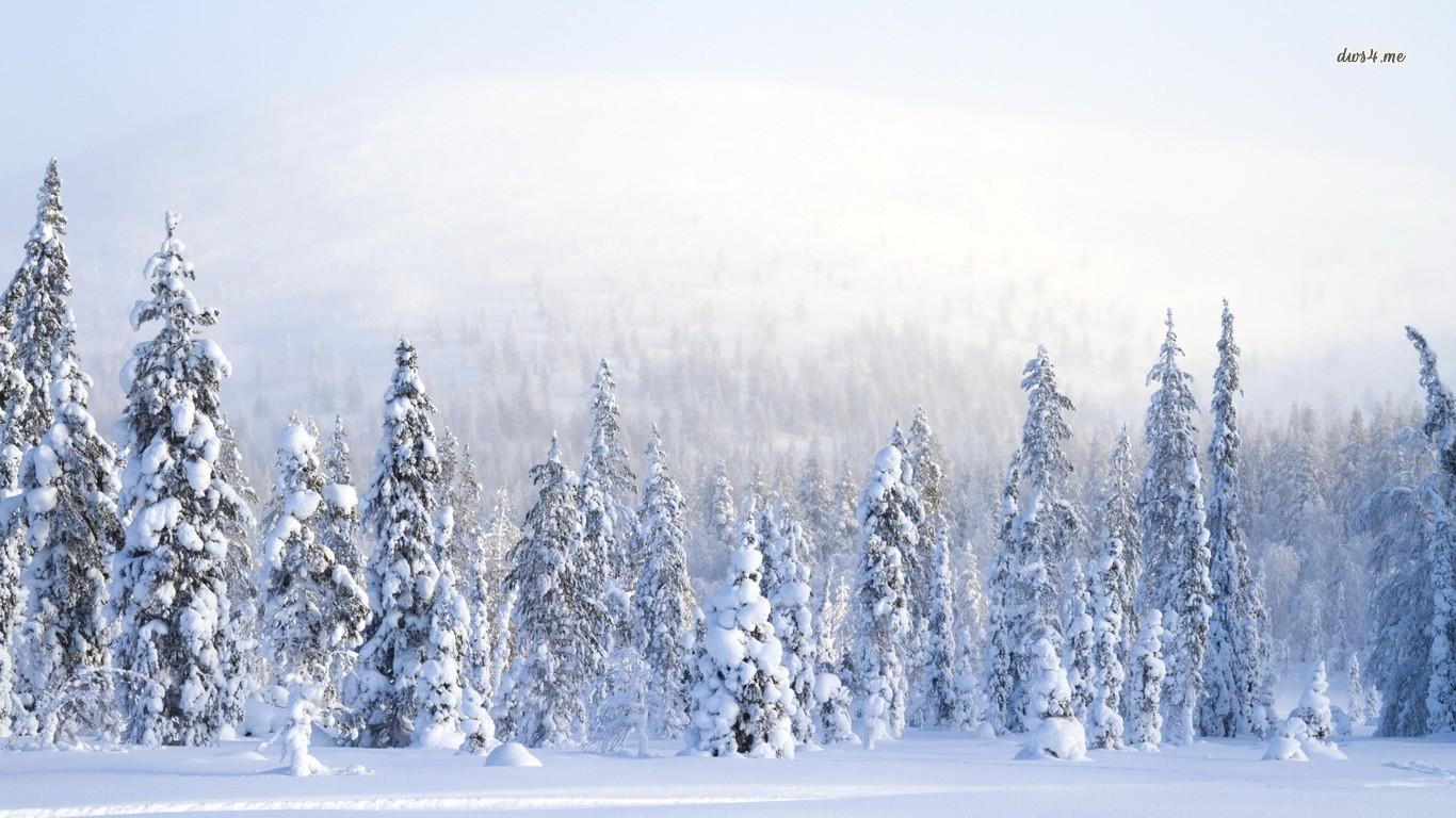 Обои на рабочий стол 2017 - Зима